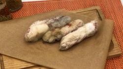 Лапы кролика