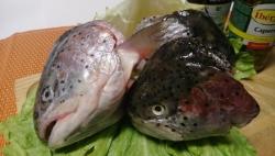 Головы красных рыб